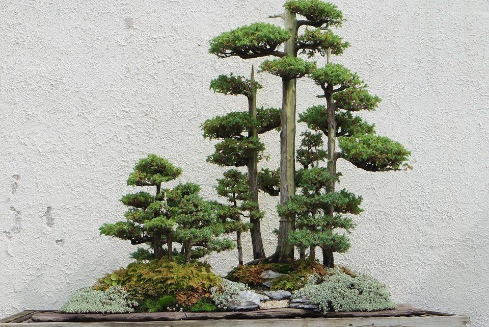 Zen … in der Kunst überall Bäume zu sehen