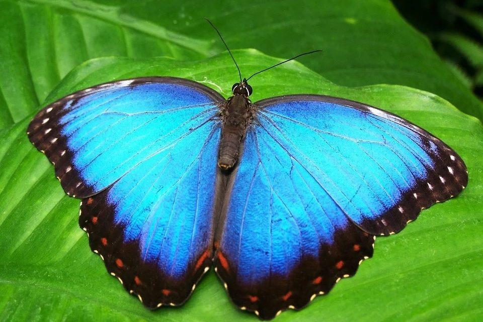 Auf dem Weg zum Schmetterling