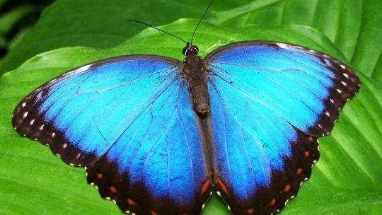 Mister Butterfly